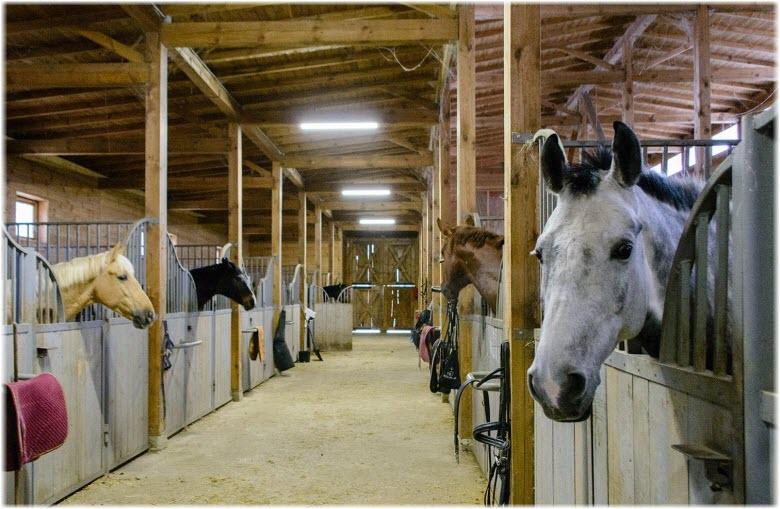 конная ферма Экзархо