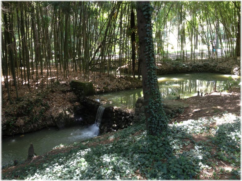 фото ручья в лесопарке