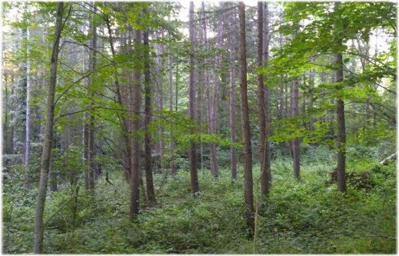 фото в Мамайском лесопарке
