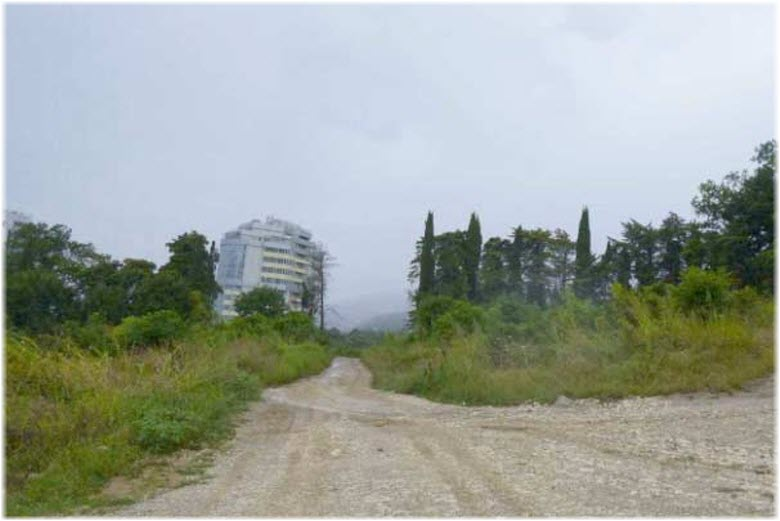 памятник природы Пекан белый