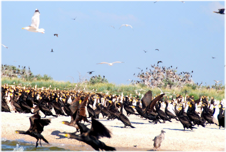 птицы на острове Ейская коса
