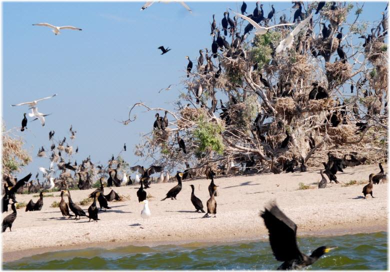 птицы на Зеленом острове