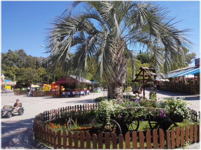 пальмы в ЦПКиО города Адлер