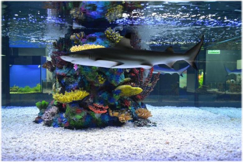 большой аквариум в Рифе
