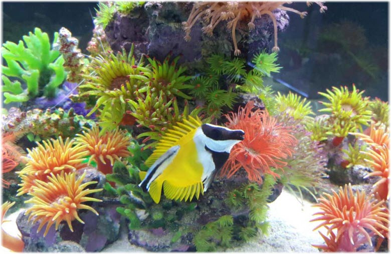 фото кораллов и коралловых рыб