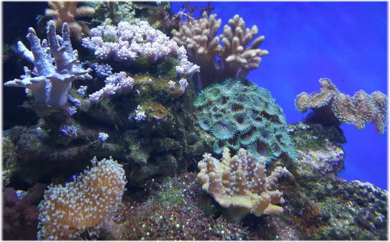 фото кораллов в океанариуме