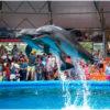 Дельфинарий Немо в Джубге