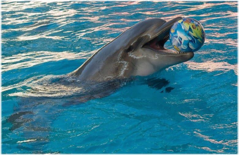 дельфины Джубгинского дельфинария