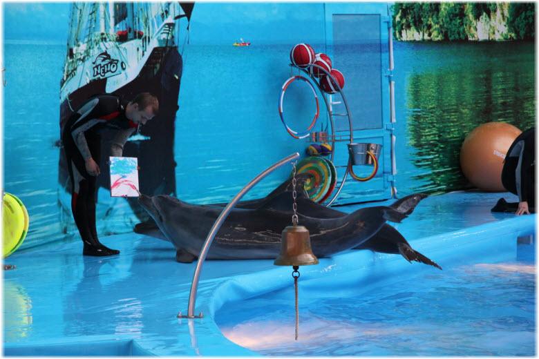 дельфины с тренерами