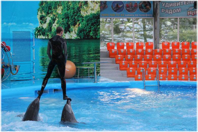 трюки с дельфинами