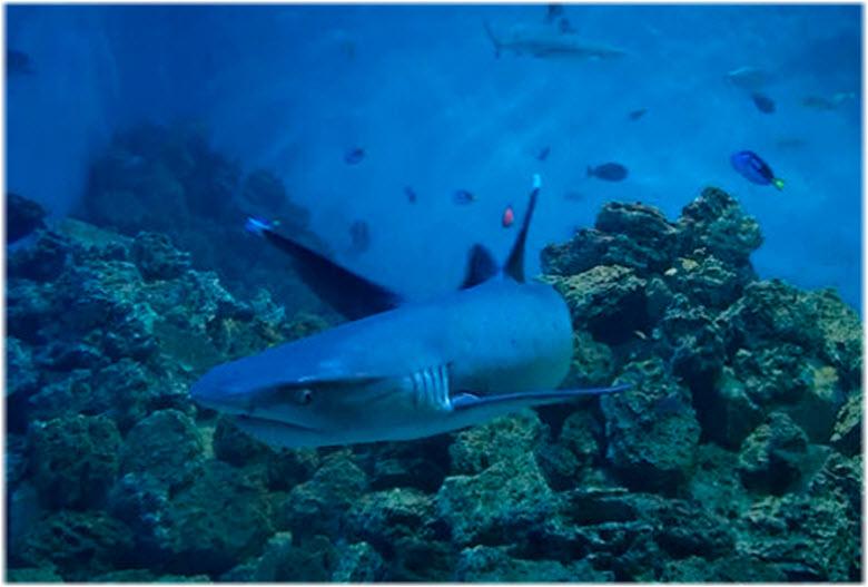 акула в Ейском океанариуме