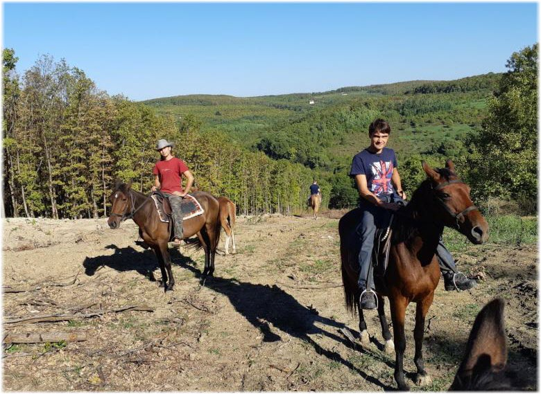 конные прогулки в Азовской