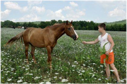 конные прогулки в Краснодаре
