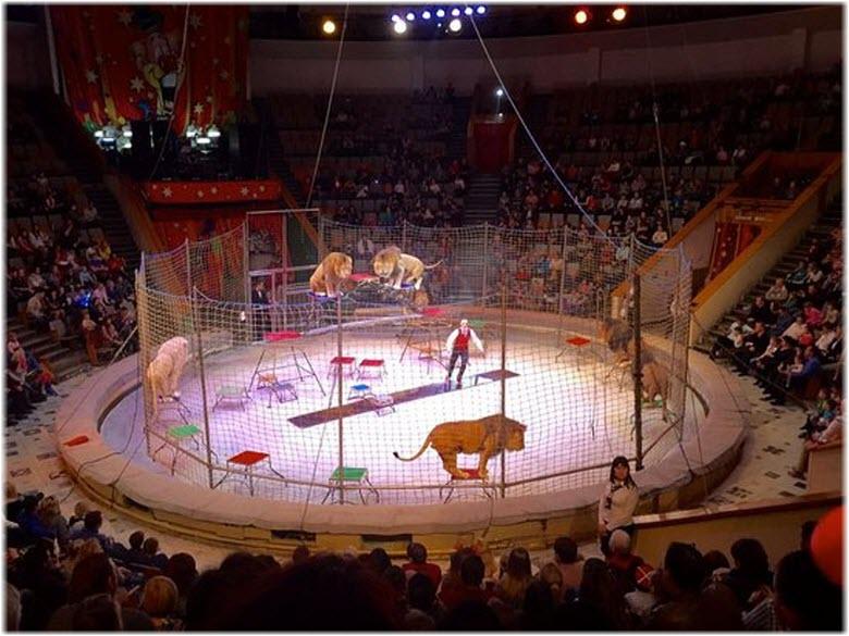 на арене цирка в Краснодаре