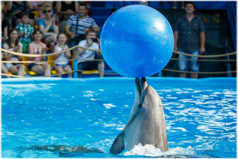 дельфинарий в Краснодаре