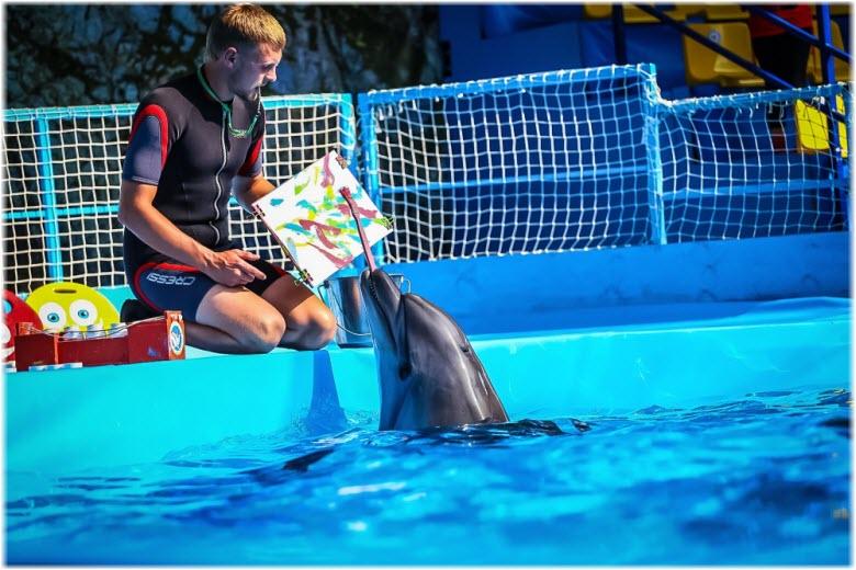 дельфины в дельфинарии Sea Life