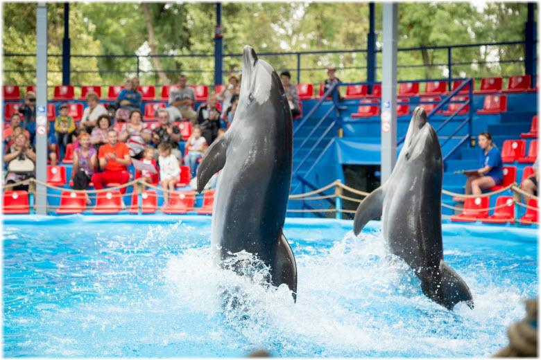 шоу дельфинов в Краснодаре
