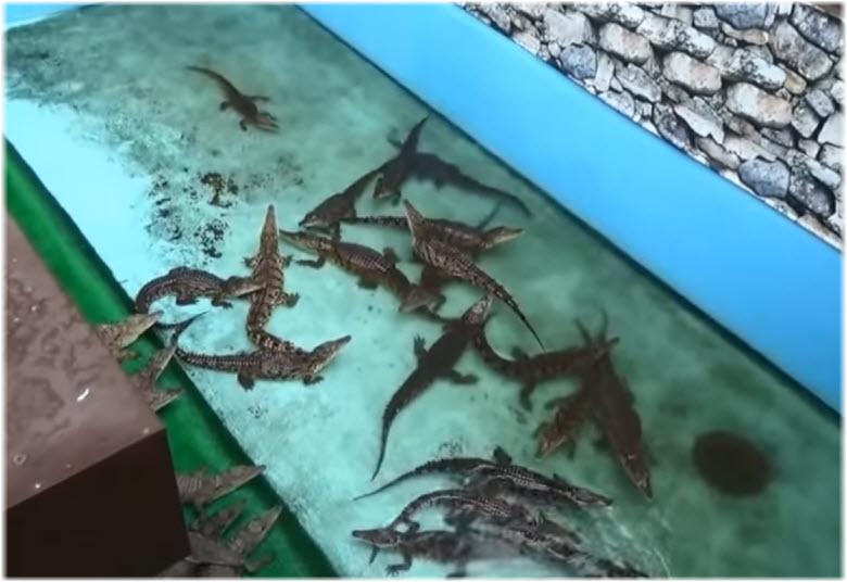 Ферма крокодилов в Кабардинке