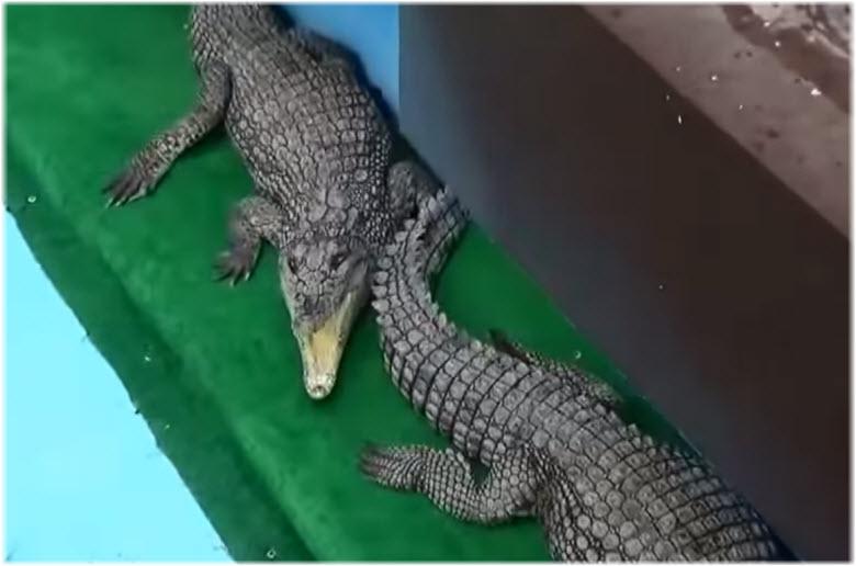 крокодилы в Крокодиловом каньоне