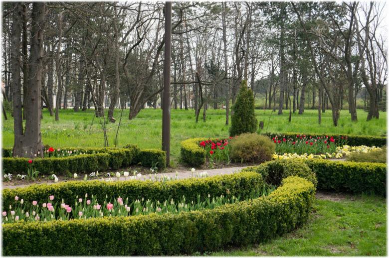 фото цветов в Ботсаду имени Косенко