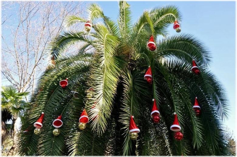 новогодние пальмы в Сочи