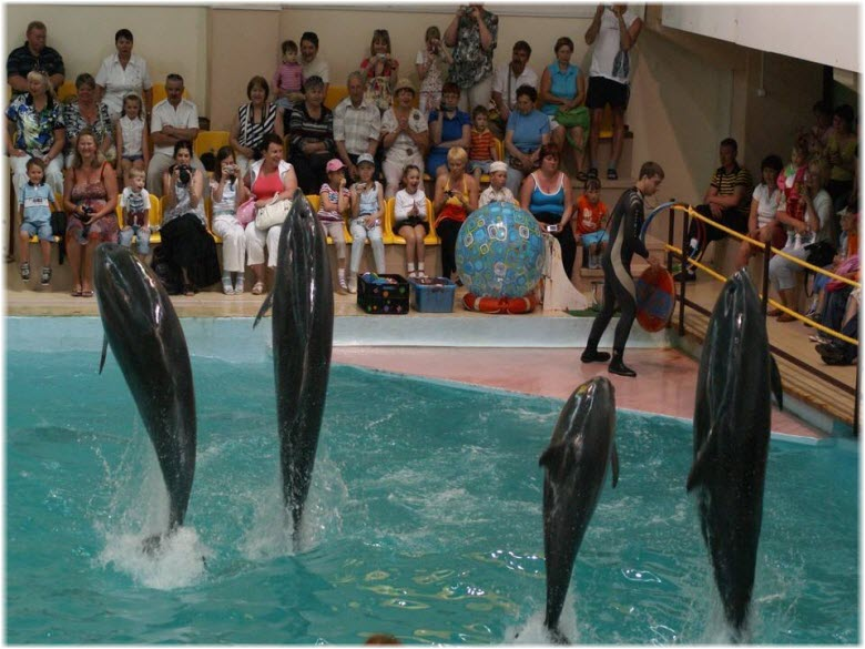 шоу с дельфинами в Геленджике