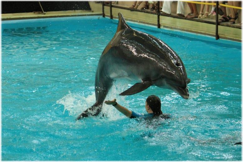 трюки с дельфнами в дельфинарии
