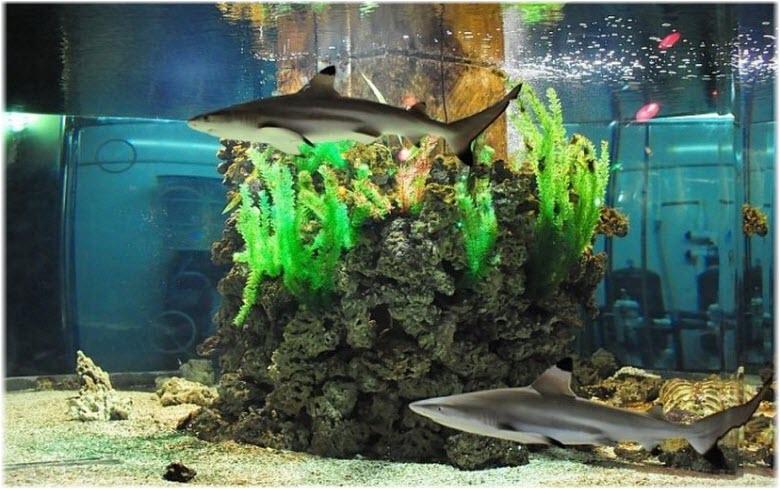 акула в Геленджикском аквариуме