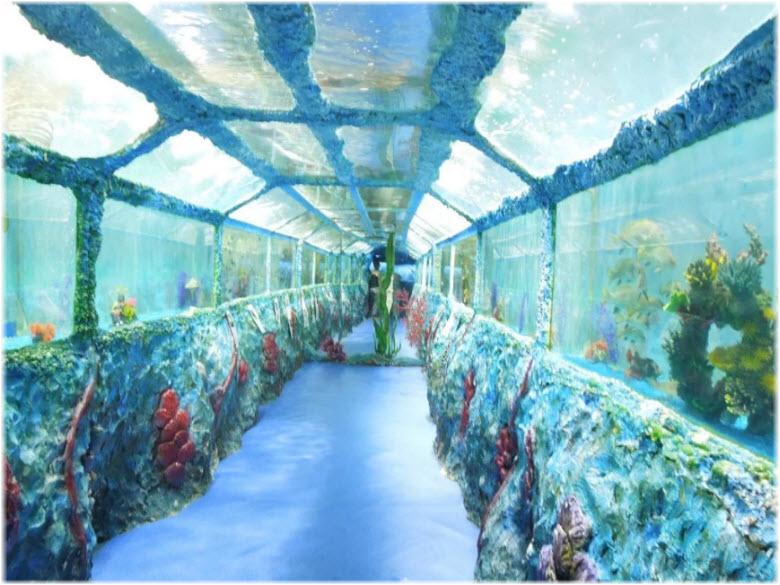 фото в океанариуме