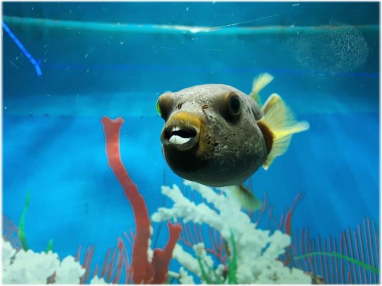 рыба в Геленджикском океанариуме