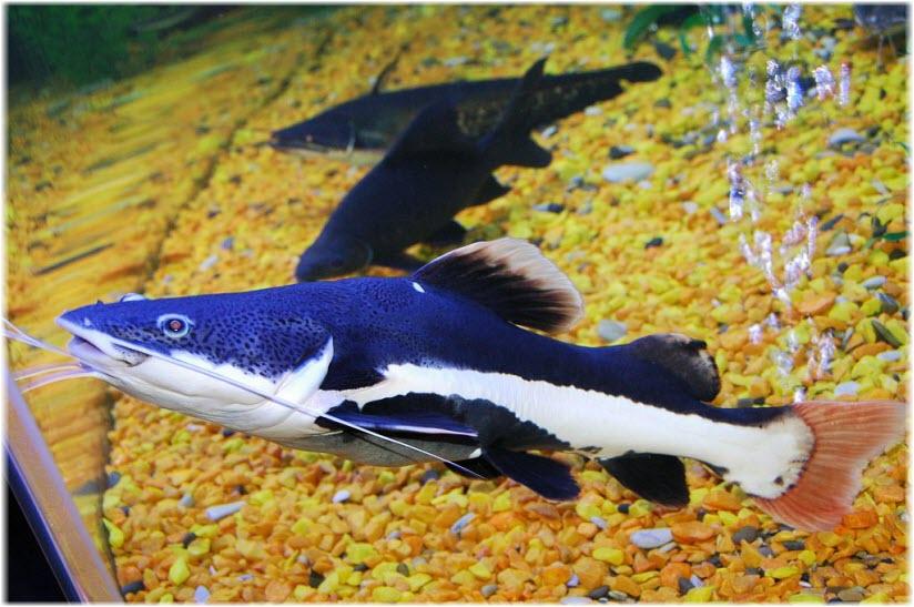 рыбки в Океан-Парке