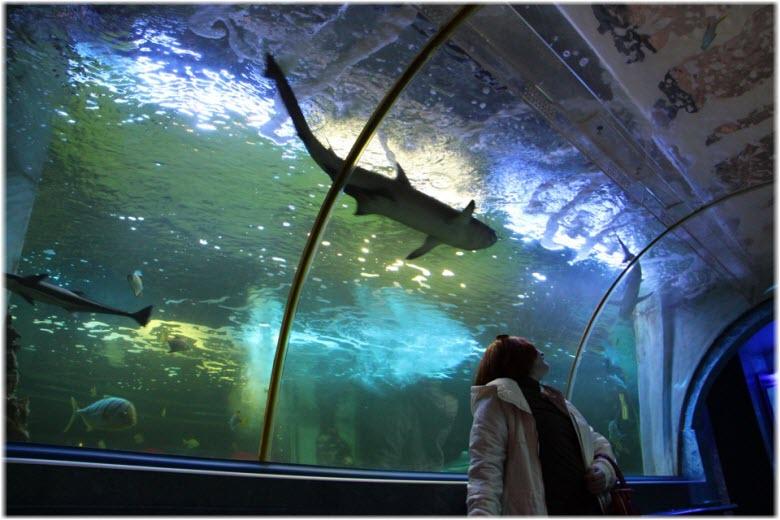 акулы в океанариуме