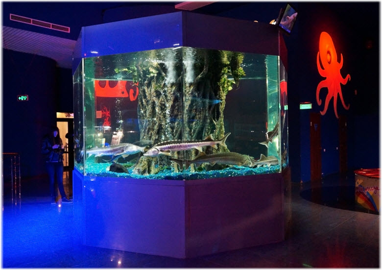 аквариумы с осетрами