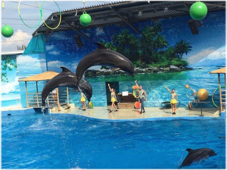 предтавления в дельфинарии Немо