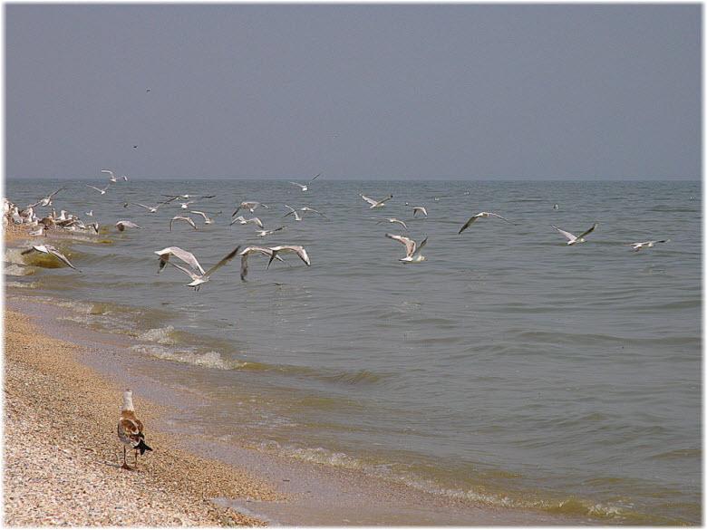 птицы в Таганрогском заливе